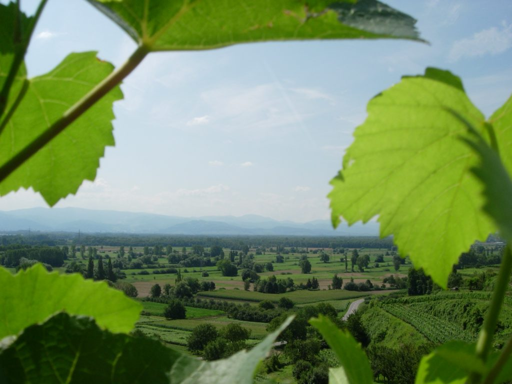 Blick über die Landschaft